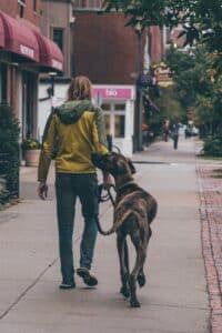 Mann geht mit Hund Spazieren